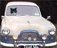 Cat in Car
